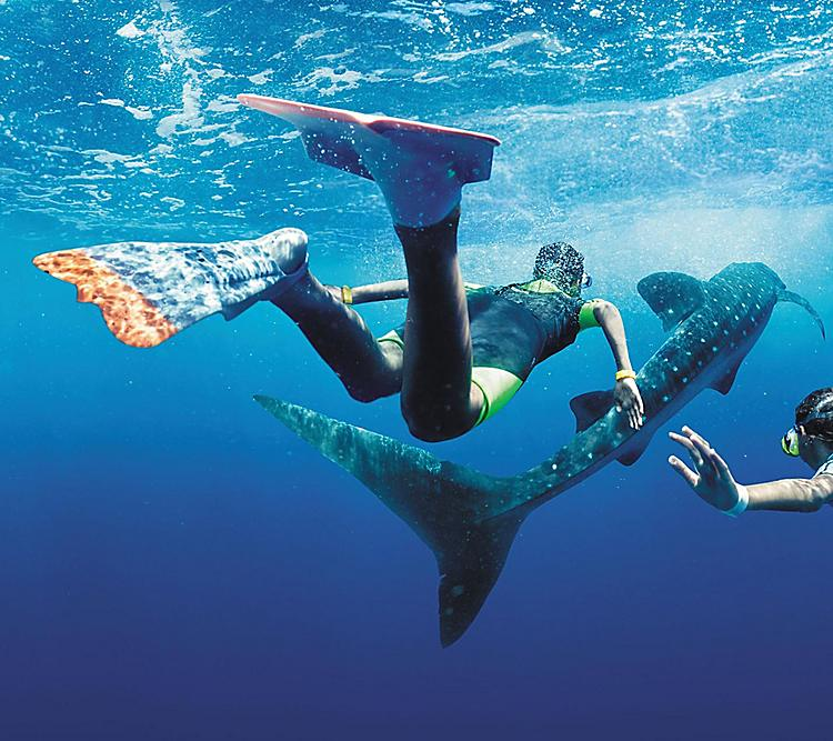 Couple Swimming with Whale Sharks in Cozumel, Mexico.