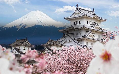 Cherry Blossoms Surrounding Himeji Castle