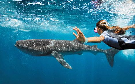 Swimming with Whale Sharks Mexico Excursion