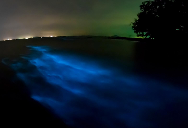 Puerto Rico Bioluminescent Bay Night Time