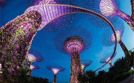 Supertrees at Night