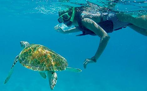Girl Snorkling with a Turtle