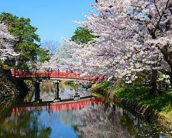 Aomori Japan Hirosaki Castle with Full Bloom of Cherry Blossoms