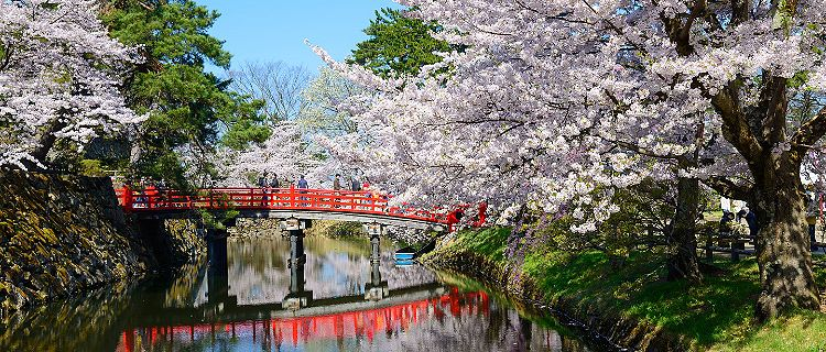 Aomori Japan Hirosaki Castle with Full Bloom of Cherry Blossoms