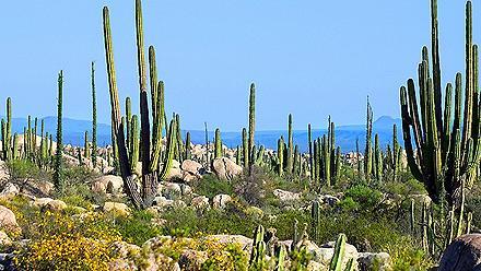 Ensenada Mexico Cactus Valley Baja California