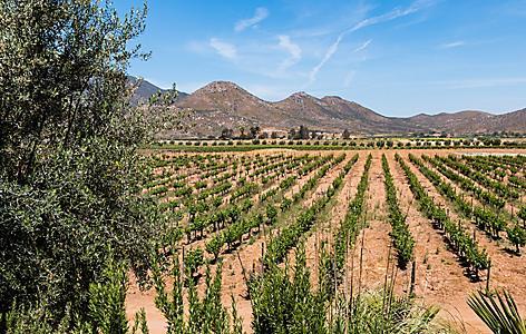 Mexico Ensenada Vineyard Valley