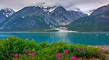 Alaska Glacier Bay National Park Wild Flowers