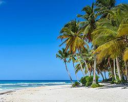 Sandy Caribbean Beach with Coconut Palm Trees and Blue Sea. Saona Island