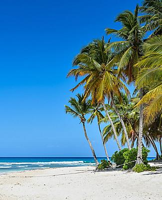 Sandy Caribbean Beach with Coconut Palm Trees and Blue Sea. Saona Island