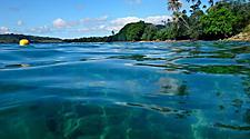 Vanuatu Luganville Coast Underwater Sea Life