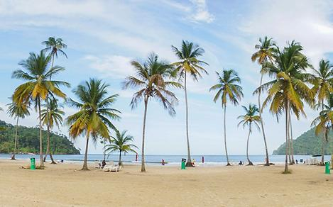 Ocean and Palm Trees at Maracas Beach in Trinidad and Tobago