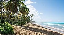 Dominican Republic Puerto Plata Beach Palm Trees
