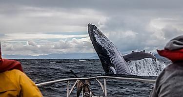 Saint Pierre Miquelon Whale Watching