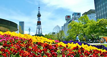 Colorful flowers in Odori Park in Sapporo, Japan