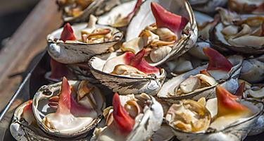 Japan Tokyo Fresh Oysters Abalone Tsukiji Market