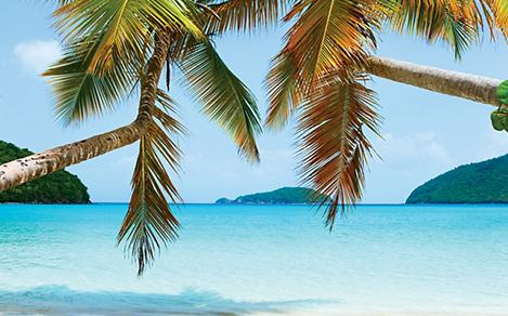 2 beach palm trees hanging over the crystal clear waters of a Caribbean island. Great place to visit during a sailing cruise.