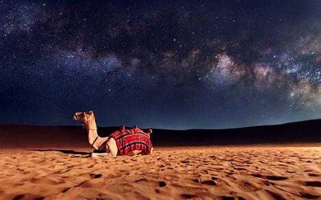 Arabian Camel in the Desert at Night